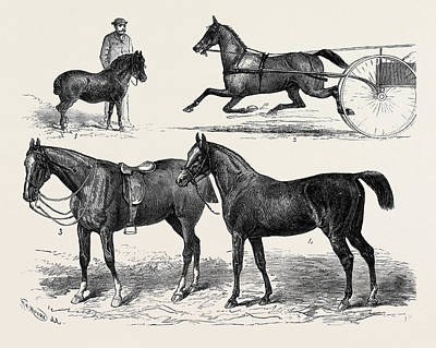 The Horse Show 1880 1. Mr. T.w. Blyths Pony Toby. 2. Mr Poster