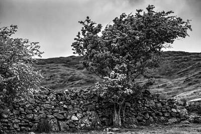 Poster featuring the photograph The Irish Wall And The Tree by Juergen Klust