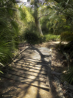 Poster featuring the photograph The Journey Along The Path Comes With Light And Shadows by Lucinda Walter