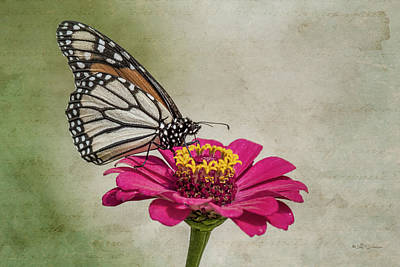 The Joy Of A Butterfly Poster by Jeff Swanson