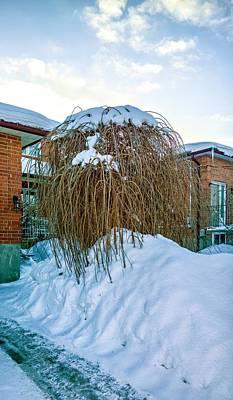 The Joy Of Winter Poster by Steve Harrington