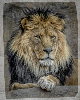 The King Poster by Ernie Echols