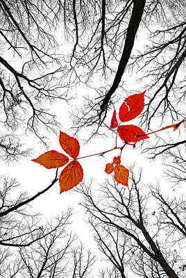 The Last Leaves Of November Poster