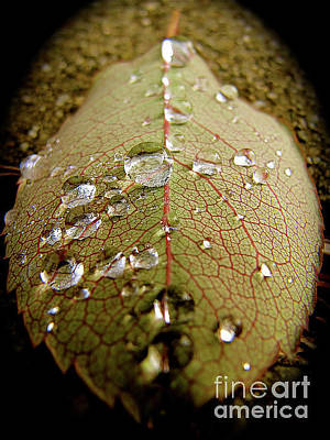 The Leaf After Rain Poster by CML Brown