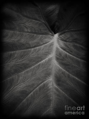 The Leaf Poster by Edward Fielding
