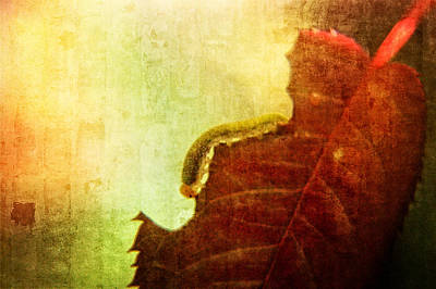The Little Inchworm Poster by Rhonda Barrett
