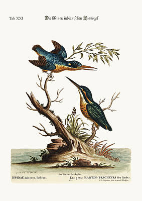The Little Indian Kingfishers Poster by Splendid Art Prints