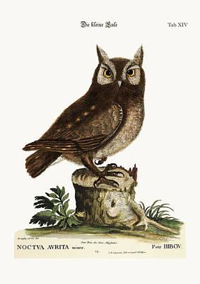 The Little Owl Poster by Splendid Art Prints