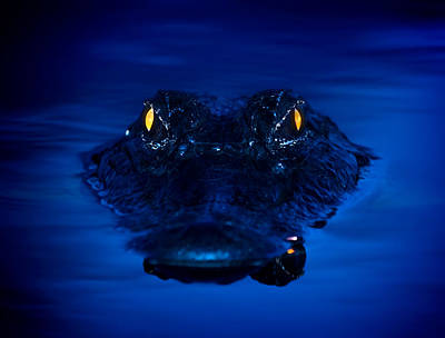 The Littlest Predator Poster by Mark Andrew Thomas