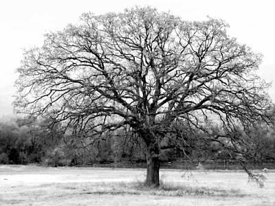 The Living Tree Poster by Deborah  Crew-Johnson