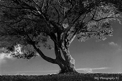 The Lone Tree Black And White Poster by Marty Gayler