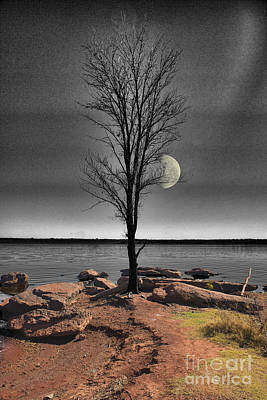 The Lonely Tree Poster by Betty LaRue