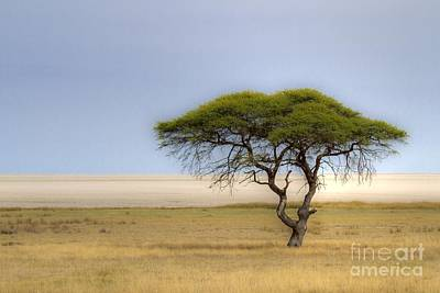 Poster featuring the photograph The Lonely Tree by Juergen Klust
