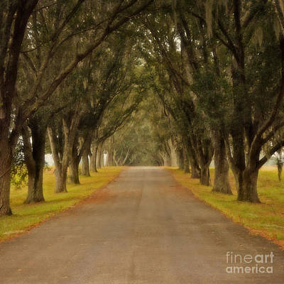 The Long Road - Central Florida Poster by Mary Machare