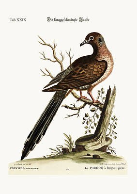 The Long-tailed Dove Poster by Splendid Art Prints