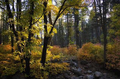 The Magic Of Autumn   Poster by Saija  Lehtonen