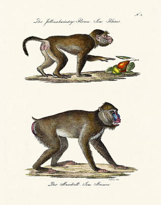 The Mandrill Poster
