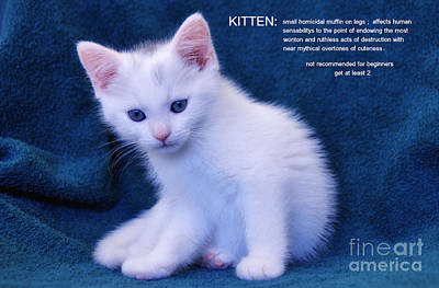 The Meaning Of A Kitten Poster