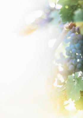 The Modern Grape 3 Poster