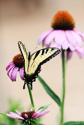 Poster featuring the photograph The Swallowtail by Trina  Ansel