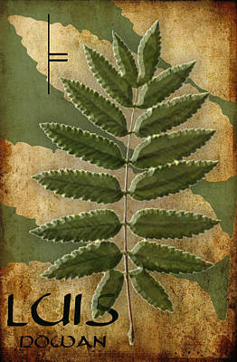 The Ogham Luis Celtic Symbol Poster