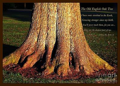 The Old English Oak Tree Poster