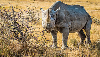 The Old Warrior - Rhinoceros Photograph Poster by Duane Miller