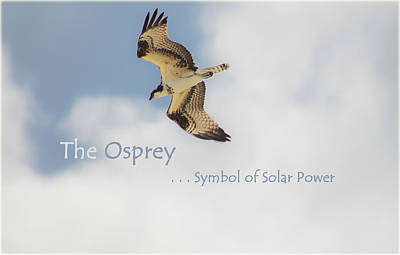 Poster featuring the photograph The Osprey by DigiArt Diaries by Vicky B Fuller