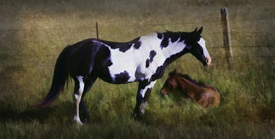 The Paint And The Foal Poster by Jacque The Muse Photography