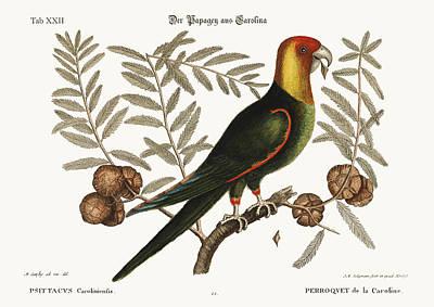 The Parrot Of Carolina Poster by Splendid Art Prints