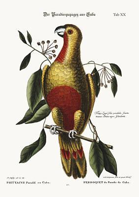 The Parrot Of Paradise Of Cuba Poster by Splendid Art Prints