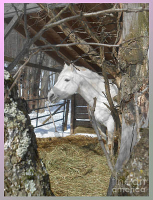 The Paso Fino Stallion At Home Poster by Patricia Keller