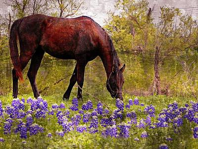 Poster featuring the photograph The Pasture by Kathy Churchman
