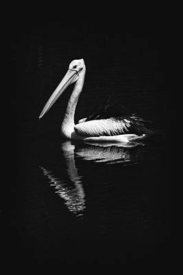 Poster featuring the photograph The Pelican by Zoe Ferrie