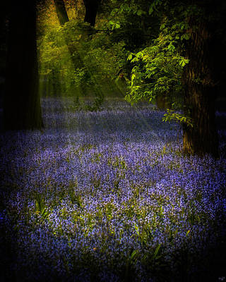 Poster featuring the photograph The Pixie's Bluebell Patch by Chris Lord