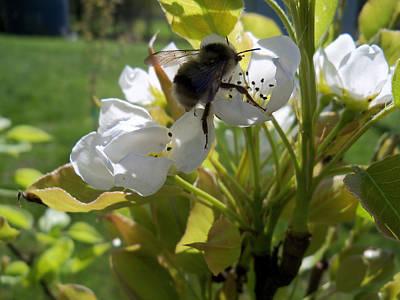 The Pollenator Poster