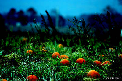 Poster featuring the photograph The Pumpkin Patch by Lesa Fine