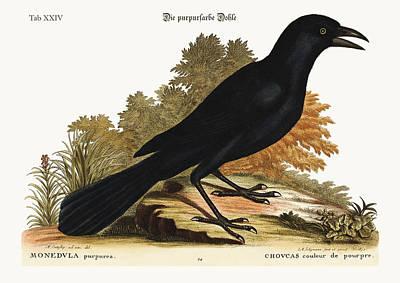 The Purple Jack-daw Poster by Splendid Art Prints
