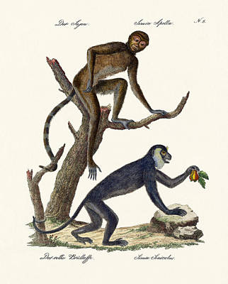 The Red Howler Monkey Poster