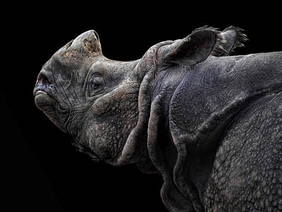 The Rhino Poster by Joachim G Pinkawa