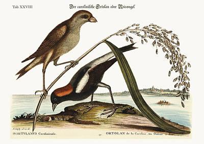 The Rice-bird Poster by Splendid Art Prints