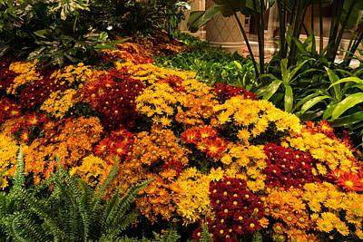 The Richness Of Autumn - An Exuberant Display Of Chrysanthemums Poster by Georgia Mizuleva