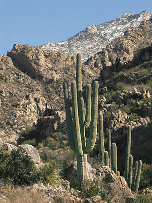 The Rugged Catalina Mountains Poster