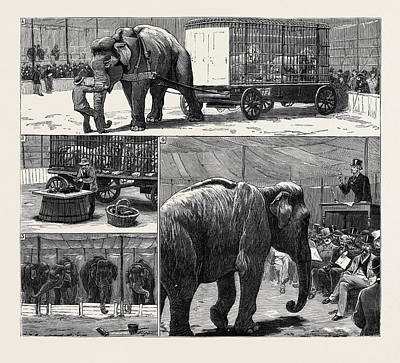 The Sale By Auction Of Myers Great American Circus Poster by English School
