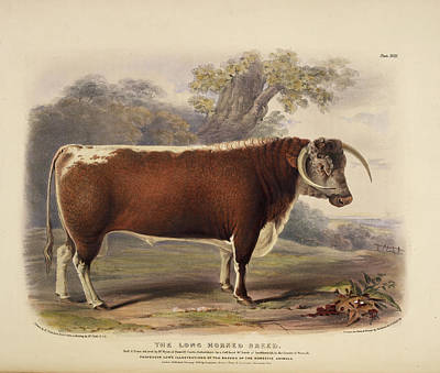 The Short Horned Breed Poster
