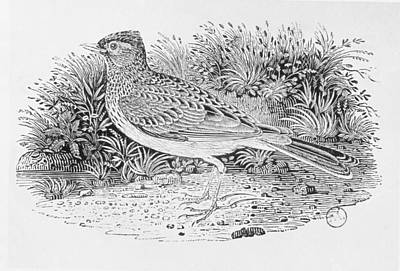 The Skylark Alauda Arvensis From The History Of British Birds Volume I, Pub. 1797 Wood Engraving Poster by Thomas Bewick