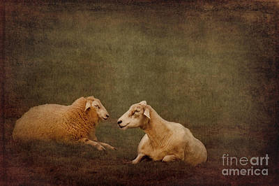 The Smiling Sheeps Poster by Angela Doelling AD DESIGN Photo and PhotoArt