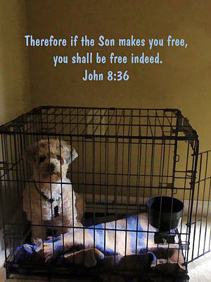 The Son Makes You Free Indeed Poster by Kathy Clark
