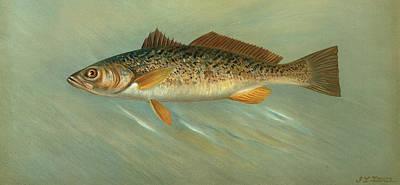 The Spanish Mackerel, Scomberomorus Maculatus Poster by Artokoloro