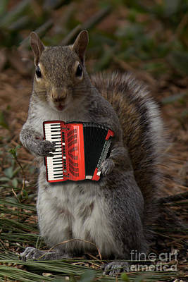 The Squirrel And His Accordion Poster by Sandra Clark